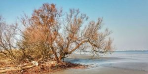 """albero solitario laguna venezia"""