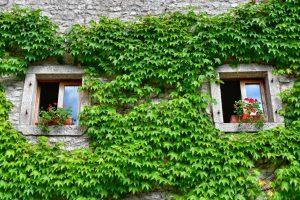 """""""cison di valmarino dettagli finestre con edera"""""""