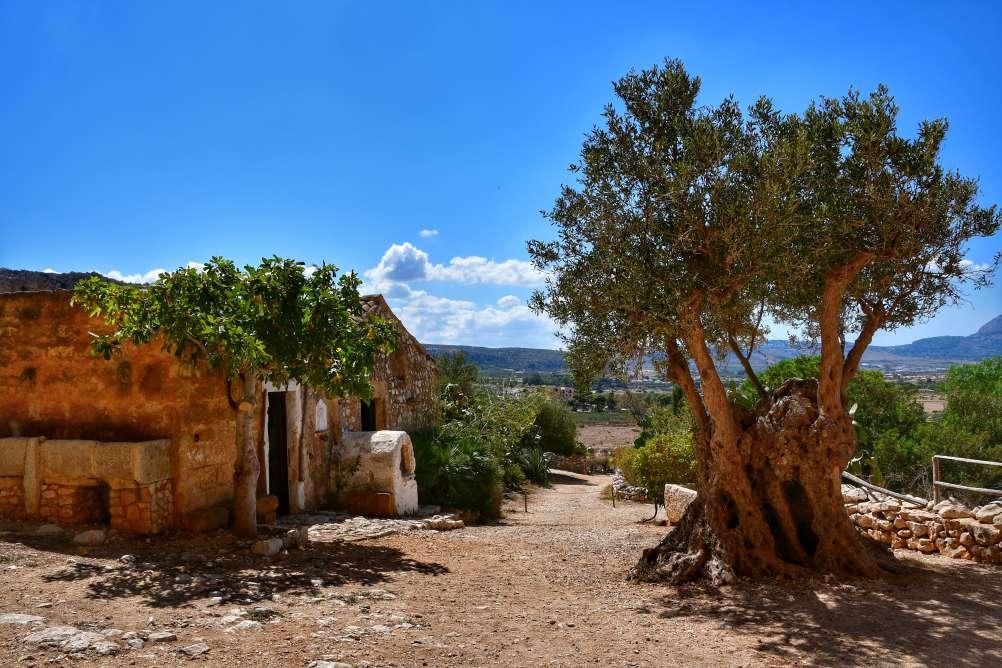"""""""casa con forno esterno albero olivi secolare"""""""